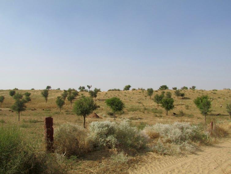 La forêt dite «épineuse du désert
